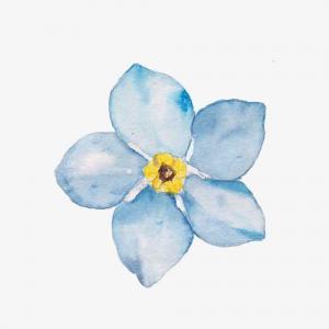 天蓝色木槿花纹身手稿图片