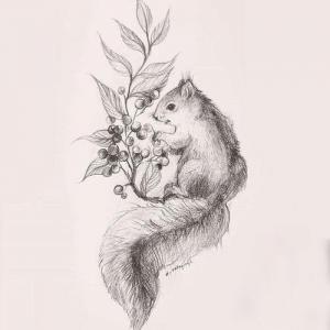 素描可爱小松鼠纹身手稿图片
