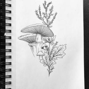 素描蘑菇纹身手稿图片