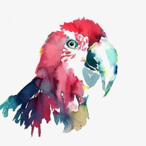 水彩文艺鹦鹉纹身手稿图片