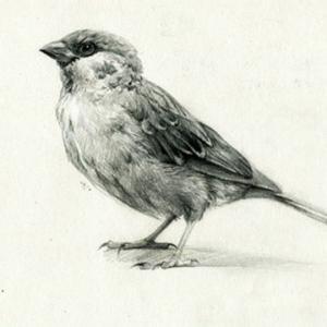 素描麻雀纹身手稿图片