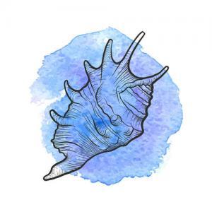 水彩蓝色海螺纹身手稿图片