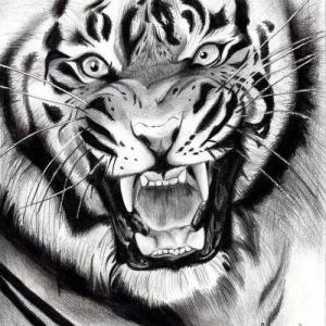 凶猛的虎头纹身手稿图片