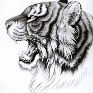 帅气的虎头纹身手稿图片