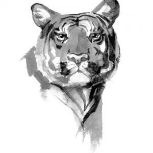 黑灰虎头纹身手稿图片