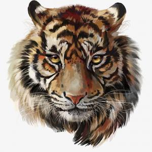 手绘水彩逼真虎头纹身手稿图片