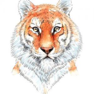 水彩虎头纹身手稿图片