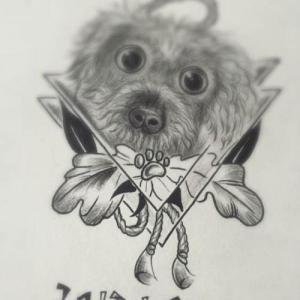 黑灰素描泰迪纹身手稿图片