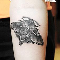 手臂飞蛾纹身图片