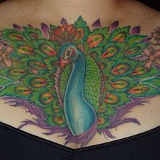 胸部孔雀开屏纹身图案
