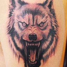 大臂怒吼的狼头纹身