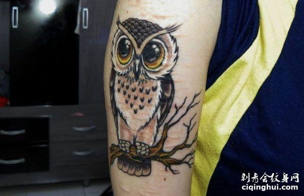 大臂彩色猫头鹰纹身图案