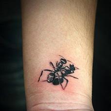 手腕蚂蚁纹身图片