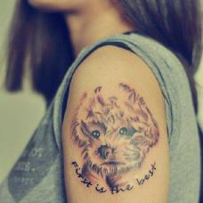 女生大臂泰迪犬纹身图案