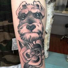 手臂好看的雪纳瑞纹身图案
