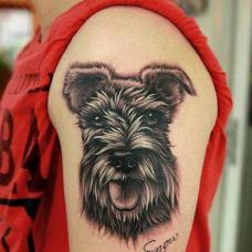 红衣男生大臂雪纳瑞纹身图案