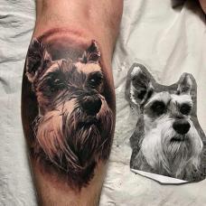 小腿雪纳瑞纹身图案
