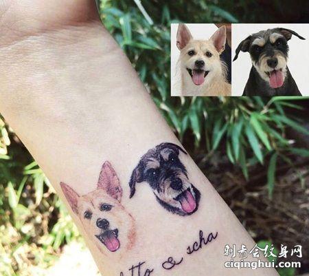 手腕宠物纹身,雪纳瑞可爱纹身图案